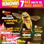 Buzz-About-Bees-Primary-Resource